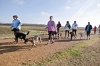 MSU's Alpha Psi chapter and its College of Veterinary Medicine hosted the second Dog Dash 5K and fun run and walk at MSU's North Farm Saturday, February 23rd, to benefit Safe Haven for Animals..