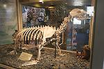 sea lion skeleton at Pier 39