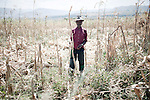 BETWEEN ADDIS ABABA & AMBO, ETHIOPIA - NOVEMBER 11: Geri Rabi a farmer in his Maize field in a remote village on November 11, 2010 between Addis Ababa & Ambo, Ethiopia. (Photo by: Per-Anders Pettersson)