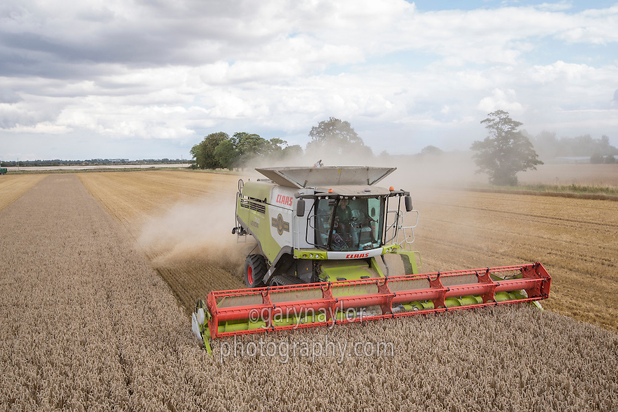 Harvesting winter wheat with a Claas Lexion 760 - Lincolnshire, August