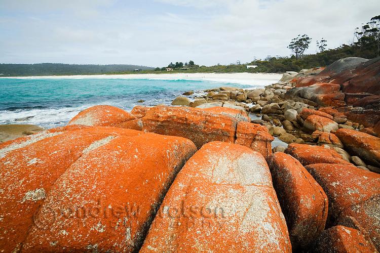 The orange-lichen rocks of Binnalong Bay - part of the famed Bay of Fires region.  St Helens, Tasmania, AUSTRALIA