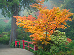Seattle, Washington:<br /> Kubota Gardens city park. Fall colors and fog, Heart Bridge