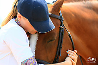 Plaid Horse Photos