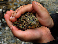 A child carefully holds a toad in his hands. Toad was found in the North Carolina mountains.