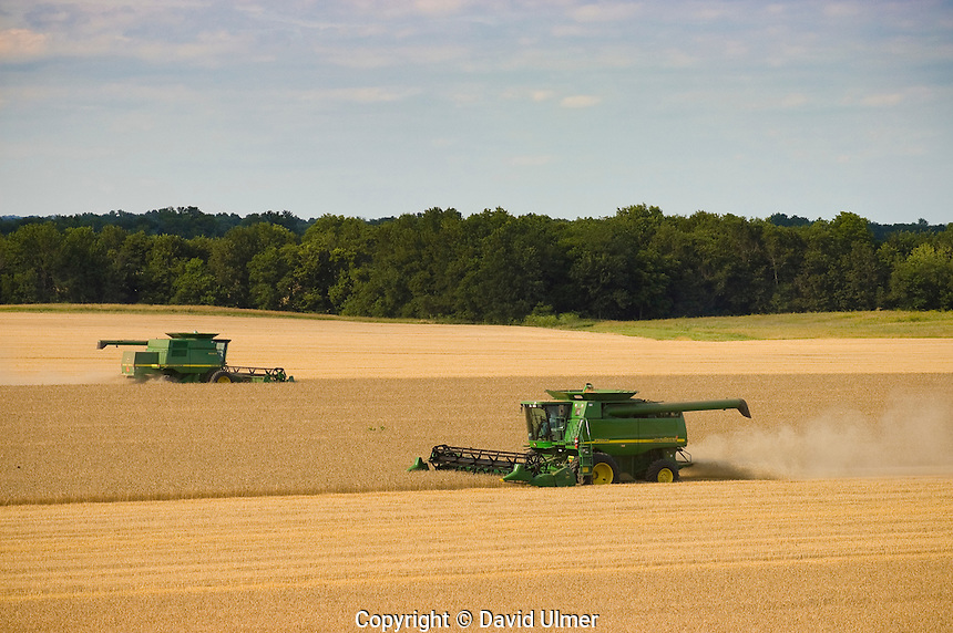 Two John Deere combines harvesting winter wheat in June..