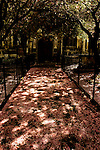 Cherry blossom fallen onto a church path between iron railings with dappled sunlight