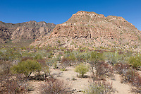 Desert country near Loreto on the Baja Peninsula, Mexico