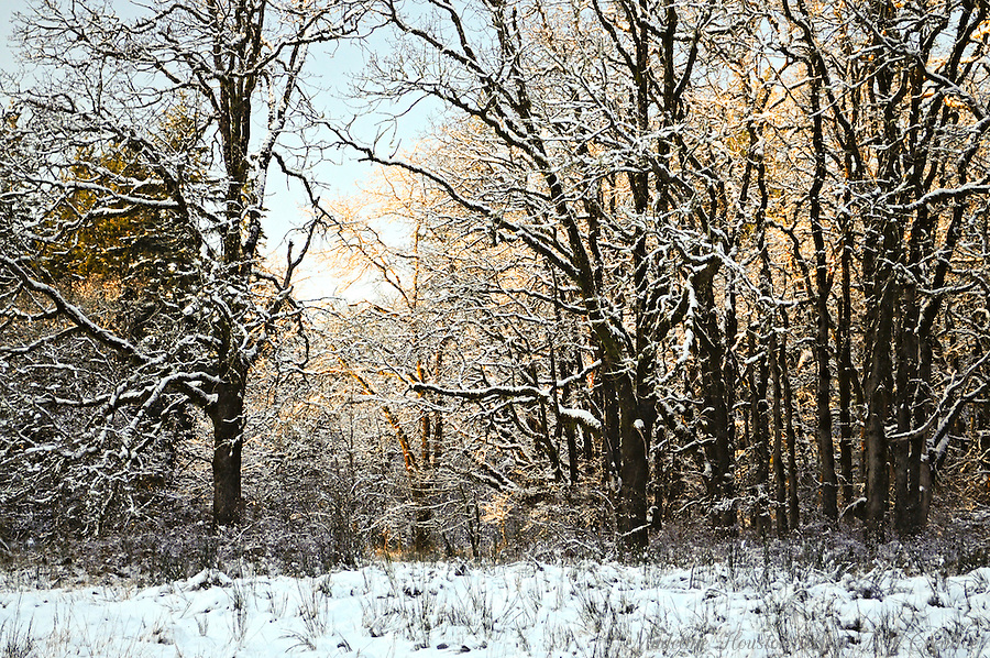 Winter scene at Scatter Creek Wildlife Area, Rochester, Washington