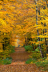Chequmegon National Forest, WI<br /> Leaf covered Clam Lake Rd. through hardwood forest in autumn