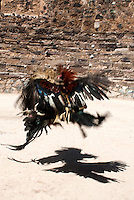 Cock fighting in the former silver mining town Real de Catorce, San Luis Potosi, Mexico. Aromas y Sabores with Chef Patricia Quintana
