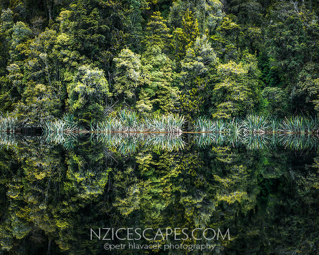 Perfect reflections of native forest in Lake Matheson, Westland Tai Poutini National Park, West Coast, South Westland, UNESCO World Heritage Area, New Zealand, NZ