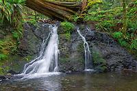 WASJ_D196 - USA, Washington, San Juan Islands, Orcas Island, Moran State Park, Rustic Falls and lush spring vegetation.