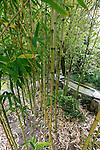 Bamboo in the Japanese Tea Garden. The Tea Garden is located inside Golden Gate Park in San Francisco, California. (Photo by Brian Garfinkel)