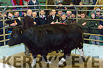 Pictured with the Supreme Champion Bullock, sponsored by AIB at the Kingdom Mart Tralee, Christmas Fat Stock and Show sale  on Monday. Pictured Brian Walsh, Tralee Mart, Paul Mulvihill, (Sponsor), Maurice Sheehan, Ardfert, Owner (seller), Ger Ahern, Ballylongford, (Buyer)