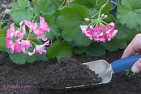 HS18-503z  Garden Trowel with Topsoil - Petunia flowers