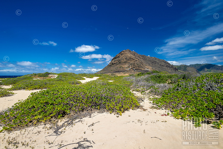 Naupaka kuahiwi (native vegetation) at Ka'ena Point and the Waianae mountains of West O'ahu.