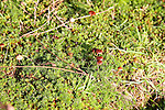 Suffolk Sandlings vegetation in autumn, details of fungus, mosses, grass