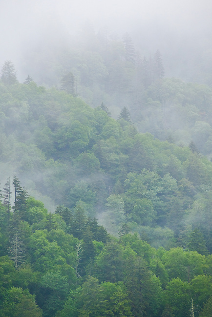 Receding storm, Newfound Gap