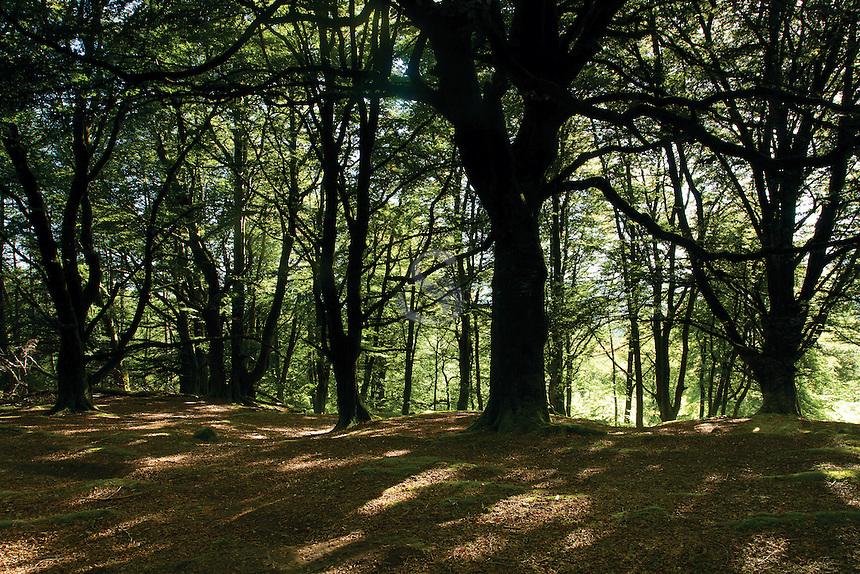 Autumn woodland, Callander, Loch Lomond and the Trossachs National Park
