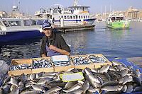 - Marsiglia, mercato del pesce al Porto Vecchio....- Marseille, the fish market in the Old Port