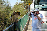 Tourist taking video and stills images of adult Barbary Macaque with baby on it´s back on a tour of the Rock of Gibraltar.