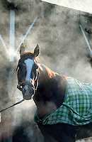 """Kentucky Blush"" getting a bath, Saratoga. Saratoga Race Course, Saratoga Racetrack, beautiful horse racing, Thoroughbred racing, horse, equine, racehorse, morning mood scenic, mood, horse racing, pretty, racehorse, horse, equine, racetrack, track, saratoga"