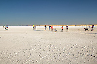 Visitors at Lake Lucero which is contained within the White Sands National Monument in  New Mexico. The lake is noted for the unusually high quantity of water-deposited and wind deposited gypsum dissolved in its intermittent waters. Annual evaporation cycles have caused much of the gypsum to precipitate into crystals of impure, brownish selenite that line the alkaline mudflats of the lakeshore. The further process of gypsum erosion abrades the fragile selenite, and other precipitated gypsum, into the pure-white sands covering most of the national monument.