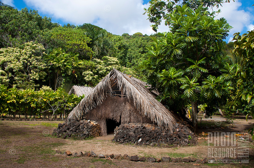 Recreated Hawaiian hut used for a sleeping house next to a breadfruit tree, Kamokila Hawaiian Village, Wailua River Valley, Kauai.