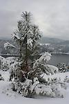 Fresh snow and Pine Tree high above Lake Coeur D Alene, Idaho