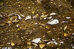 AF5GX4 Bedding planes of soft marine sandstone showing sea shells