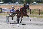 Summer Festival Harness Racing. Friday 23 January 2015. Blenheim, New Zealand. Photo: Ricky Wilson/www.shuttersport.co.nz