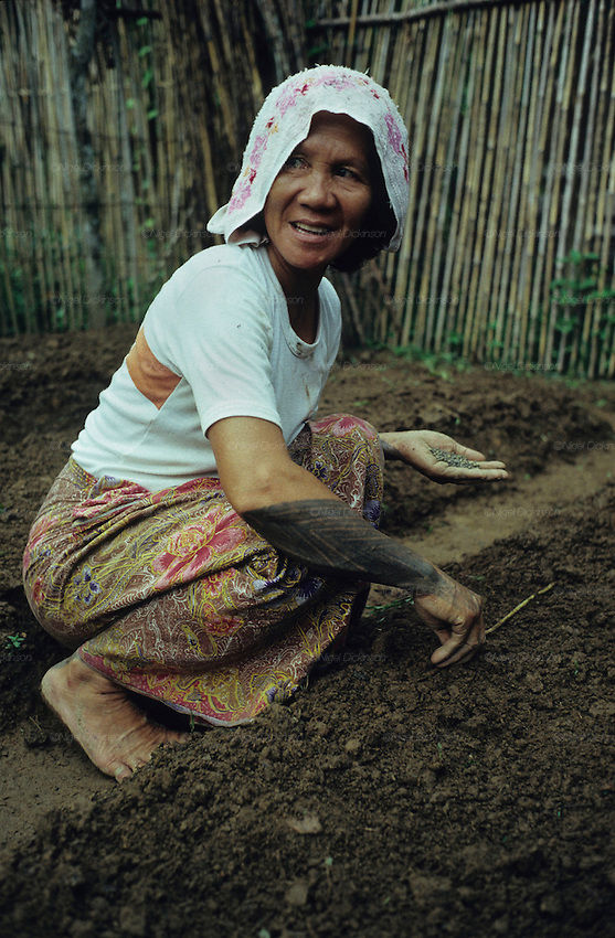 DAYAK, MALAYSIA. Sarawak, Borneo, South East Asia.  Dayak woman, with tattoos,  planting seeds. Tropical rainforest and one of the world's richest, oldest eco-systems, flora and fauna, under threat from development, logging and deforestation. Home to indigenous Dayak native tribal peoples, farming by slash and burn cultivation, fishing and hunting wild boar. Home to the Penan, traditional nomadic hunter-gatherers, of whom only one thousand survive, eating roots, and hunting wild animals with blowpipes. Animists, Christians, they still practice traditional medicine from herbs and plants. Native people have mounted protests and blockades against logging concessions, many have been arrested and imprisoned.
