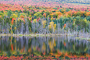 Autumn, White Mountains