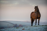 Thursday  01 December 2016<br /> Pictured:A horse stands in a frosty field near Bancyfelin, West Wales <br /> Re: The cold snap continues across the UK with many parts of the country experiencing sub zero temperatures.