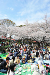 April 7, 2012, Tokyo, Japan - Cherry blossoms in full bloom are seen at Ueno Park in Taito ward, Tokyo on Saturday, April 7, 2012. (Photo by AFLO) [1160] -ty-