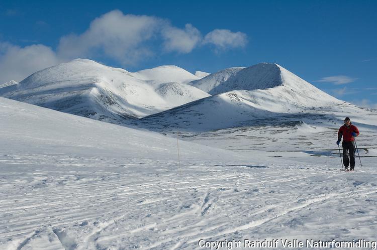 Skiløper i Rondane ---- Skier in Rondane