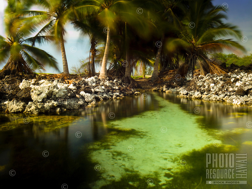 A small brackish pond with fish hidden behind Makalawena Beach, Kailua-Kona, Big Island.