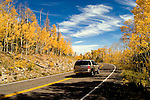 Car on Utah highway amidst Golden Aspen leaves, aspen trees in fall, white bark, autumn, fall leaves, fall color, Markagunt Plateau, Cedar Mountain, Hwy 132, Mile Marker 24, Dixie National Forest, Utah, UT, car, tourists, tourism, sightseeing, Image ut325-17475, Photo copyright: Lee Foster, www.fostertravel.com, lee@fostertravel.com, 510-549-2202