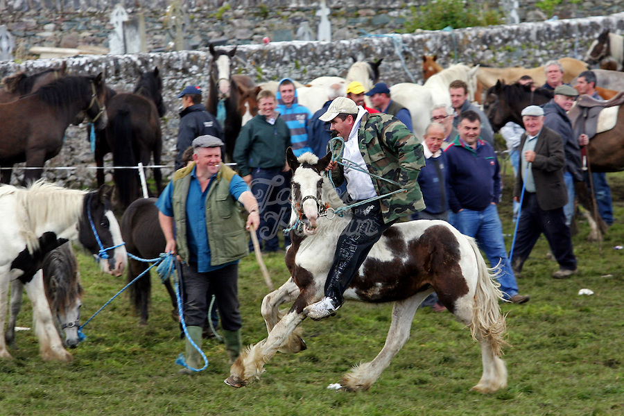10/8/2009. Puck Fair. A scene from the Puck Fair Horse Fair Killorglin Co Kerry. Picture James Horan/Photocall Ireland Puck Fair images by James Horan.<br /> A wild mountain goat is crowned King Puck for the weekend at one of Ireland's oldest fairs dating back to the 1600's. The first day of the Puck Fair is known as Gathering Day, The Puck goat is Enthroned on a stand in the town square and the great horse fair is held. The second day is known as Fair Day, This is the day of the cattle fair and general festivities. The last day is known as Scattering Day when the brief reign of Ireland's only king is ended and the Puck goat is returned to his mountain home.<br /> Pictures by James Horan.