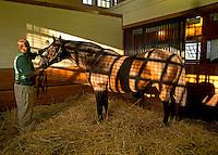 A.P. Indy at Lane's End Farm, Versailles, KY  9-24-13
