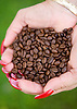 Roasted coffee beans at The Kauai Coffee Company on the island of Kauai, Hawaii. Photo by Kevin J. Miyazaki/Redux