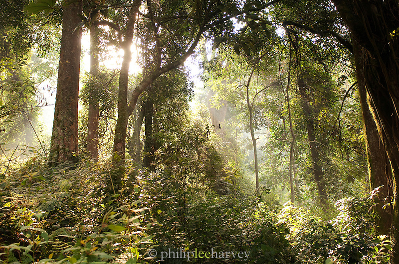 Jungle in Nyungwe National Park, Rwanda
