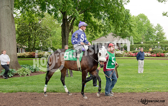 Sense of Reality before The Our Mims Stakes at Delaware Park on 5/18/13