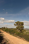 Israel, Mount Carmel. Ofer forest scenic road