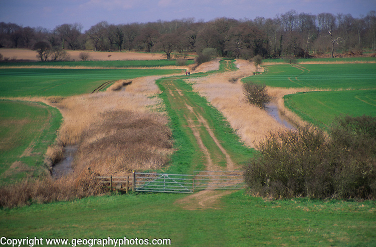 ADD2Y6 The Thrift, an ancient causeway across marshland to Burrow Hill, Butlet marshes, Suffolk, England