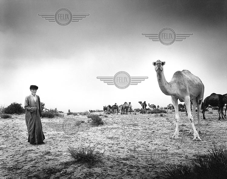 Morocco, Atlantic Ocean, November 2002..Man herding camels along the coast..Photo: Tim Dirven/Panos Pictures..Marokko. Atlantische Oceaan, november 2002..Herder met een kudde dromedarissen langs de kust..foto: Tim Dirven/HH..