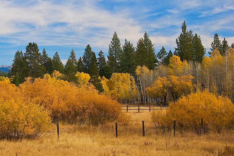 Lake Tahoe Fall Color.