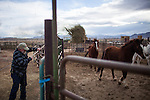 YERINGTON NV - JANUARY 29, 2014: Darrell Pursel feeds horses on his ranch as a drought emergency is declared in Nevada. Pursel's family has owned the ranch since 1863, and he can't remember a drought this bad. CREDIT: Max Whittaker for The New York Times