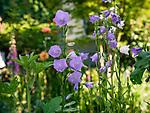 6.4.18 - In The Garden....