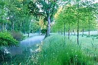 France, Maine-et-Loire (49), Brissac-Quincé, château de Brissac, ruisseau de Montayer et allée bordée de chênes rouge d'Amérique